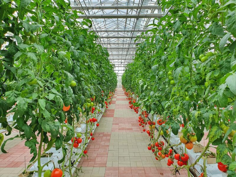 Vertical Agriculture, Farming
